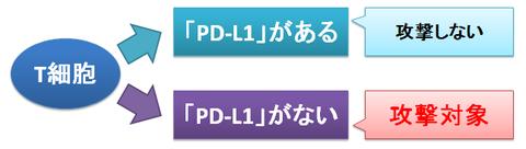 T細胞とPD-L1~攻撃対象の判断