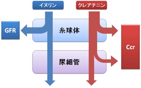 CcrとGFRの概略図