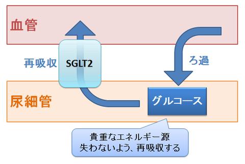 SGLT2とグルコース
