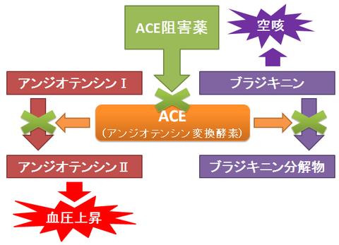 ACE阻害薬と空咳