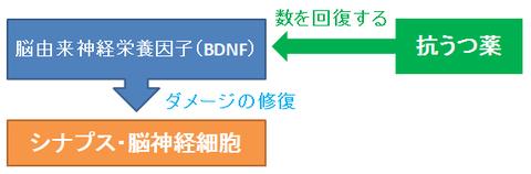 BDNFと抗うつ薬の効果