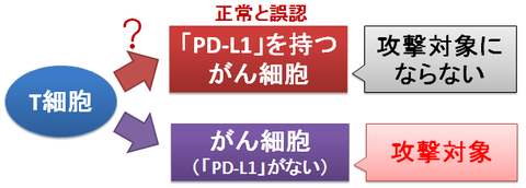 T細胞とPD-L1~がん細胞に対して不応答になる