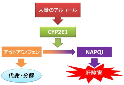 アセトアミノフェンとお酒~NAPQIの肝毒性