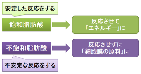 飽和脂肪酸と不飽和脂肪酸~利用方法の違い