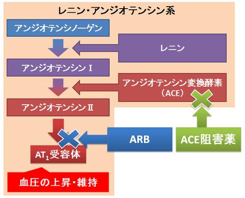 ARBとACE阻害薬~RAS