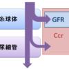 「クレアチニン・クリアランス(Ccr)」と「糸球体濾過量(GFR)」の違いと使い分けは?~糸球体と尿細管からの排泄